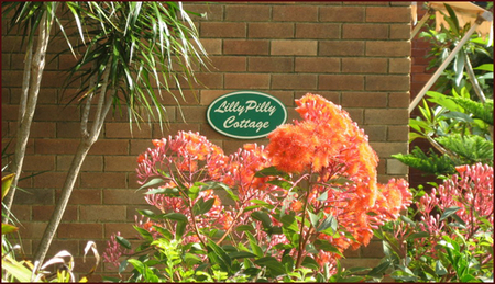 Lillypilly - Accommodation Kalgoorlie
