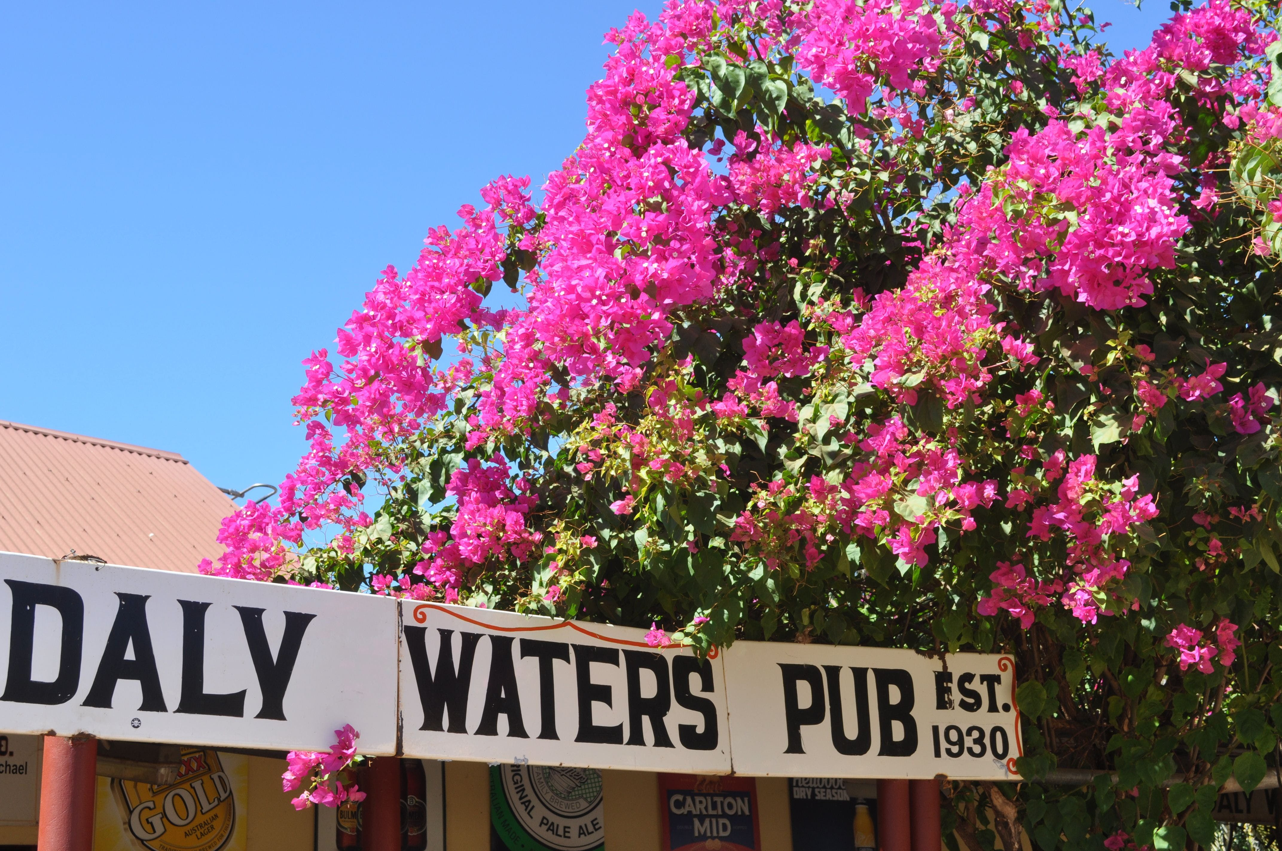 Daly Waters Historic Pub - Accommodation Kalgoorlie