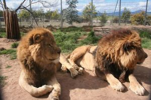 Mansfield Zoo - Accommodation Kalgoorlie