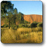 Uluru - Kata Tjuta National Park - Accommodation Kalgoorlie