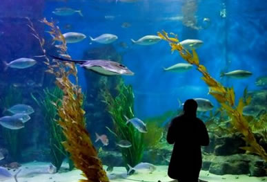 Melbourne Aquarium - Accommodation Kalgoorlie