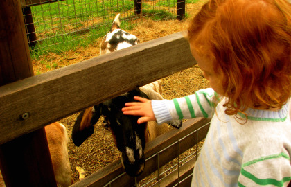 Collingwood Children's Farm - Accommodation Kalgoorlie