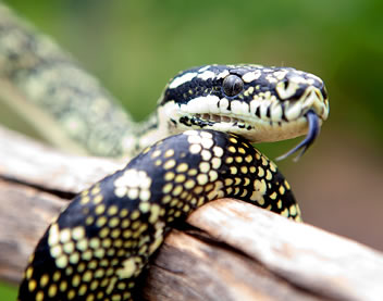 Reptile Encounters - Accommodation Kalgoorlie