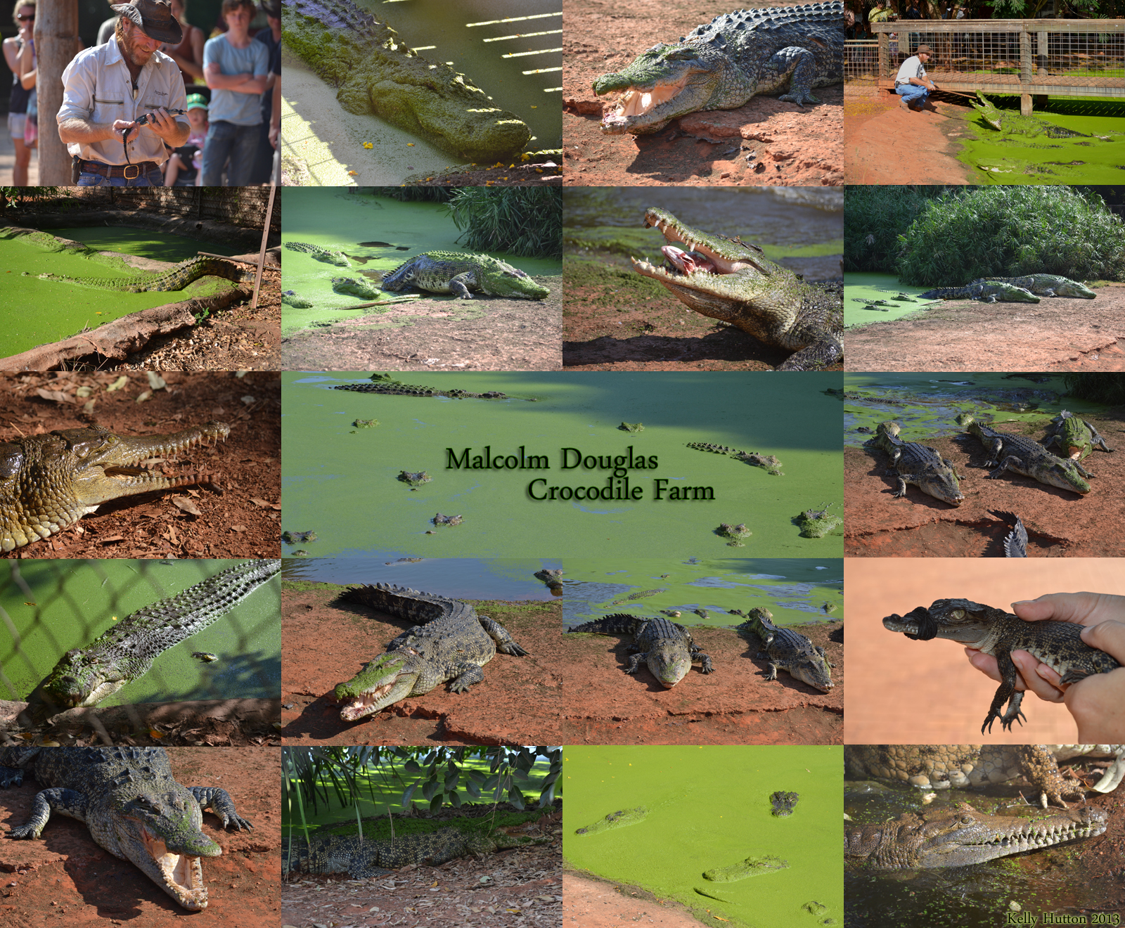 The Malcolm Douglas Crocodile Park - Accommodation Kalgoorlie