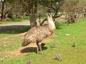 Minlaton Fauna Park - Accommodation Kalgoorlie
