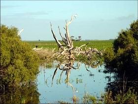 Bool Lagoon Game Reserve and Hacks Lagoon Conservation Park - Accommodation Kalgoorlie
