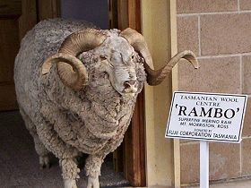 Tasmanian Wool Centre - Accommodation Kalgoorlie