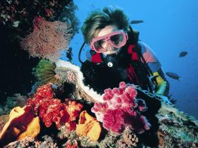 Cook Island Dive Site - Accommodation Kalgoorlie