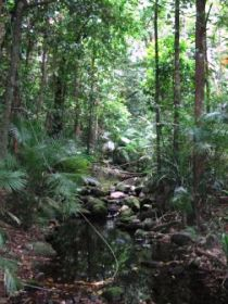 Mossman Gorge Rainforest Circuit Track Daintree National Park - Accommodation Kalgoorlie
