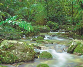 Mossman Gorge Daintree National Park - Accommodation Kalgoorlie