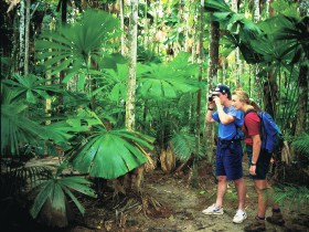 Mount Sorrow Ridge Trail Daintree National Park - Accommodation Kalgoorlie