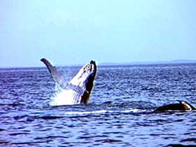 Whale Watching - Accommodation Kalgoorlie