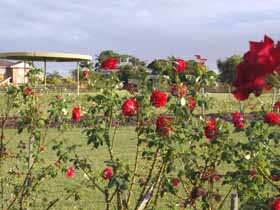 Elizabeth Park Rose Gardens - Accommodation Kalgoorlie