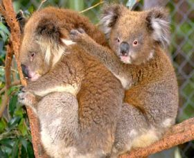 Shoalhaven Zoo - Accommodation Kalgoorlie