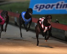 Dapto Dogs - Accommodation Kalgoorlie