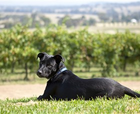 Moothi Estate Vineyard and Cellar Door - Accommodation Kalgoorlie