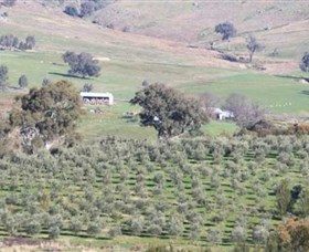 Wymah Organic Olives and Lambs - Accommodation Kalgoorlie