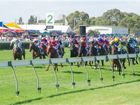 Morphettville Racecourse - Accommodation Kalgoorlie