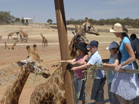 Monarto Open Range Zoo - Accommodation Kalgoorlie