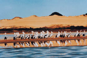 Coorong National Park - Accommodation Kalgoorlie