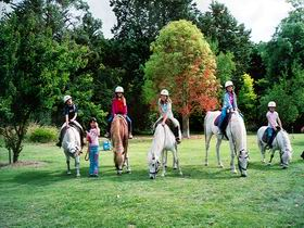 Limestone Coast Horseriding - Accommodation Kalgoorlie