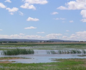 Fivebough Wetlands - Accommodation Kalgoorlie