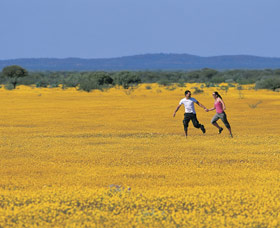 Wildflowers of the Mid West - Accommodation Kalgoorlie