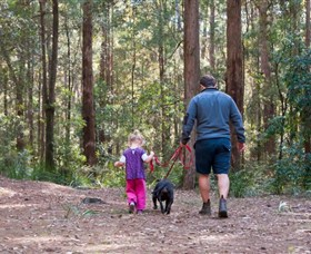 Olney State Forest - Watagan Mountains - Accommodation Kalgoorlie