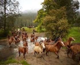 Glenworth Valley Horse Riding - Accommodation Kalgoorlie