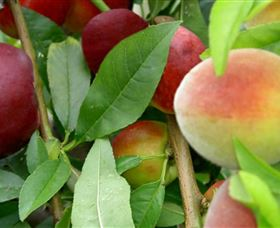 Fruit Salad Tree Company - Accommodation Kalgoorlie