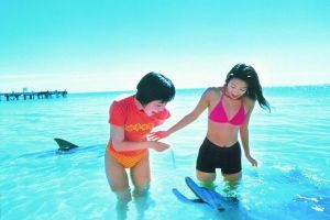 Monkey Mia Dolphins  Shark Bay Air Tour From Perth - Accommodation Kalgoorlie