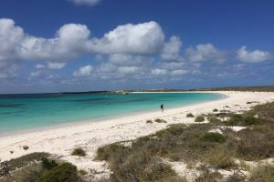 Abrolhos Island Half Day Fly and Flipper - Accommodation Kalgoorlie