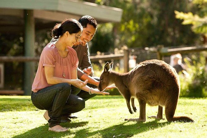 Very Best of Perth Tour - Wildlife Park  City Highlights Tour - Accommodation Kalgoorlie
