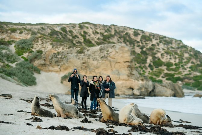 Small-Group Kangaroo Island 4WD Tour from Adelaide - Accommodation Kalgoorlie