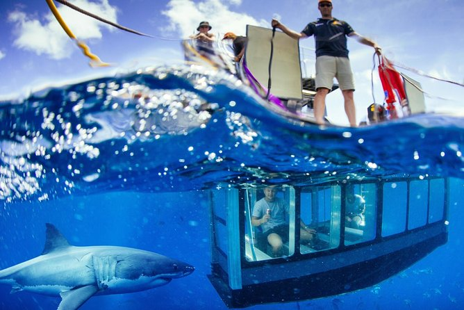 White Shark Tour with Optional Cage Dive from Port Lincoln - Accommodation Kalgoorlie