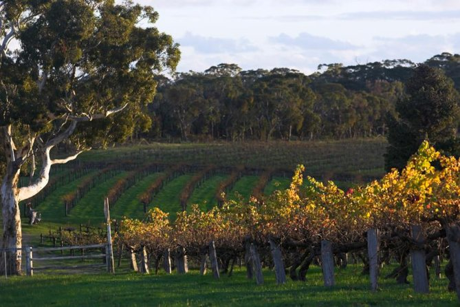 Barossa Valley with Hahndorf Tour from Adelaide - Accommodation Kalgoorlie