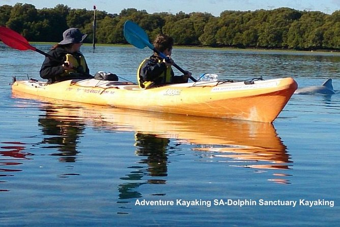 Dolphin Sanctuary and Ships Graveyard Kayak Tour - Accommodation Kalgoorlie