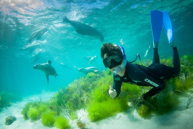 Half-Day Sea Lion Snorkeling Tour from Port Lincoln - Accommodation Kalgoorlie