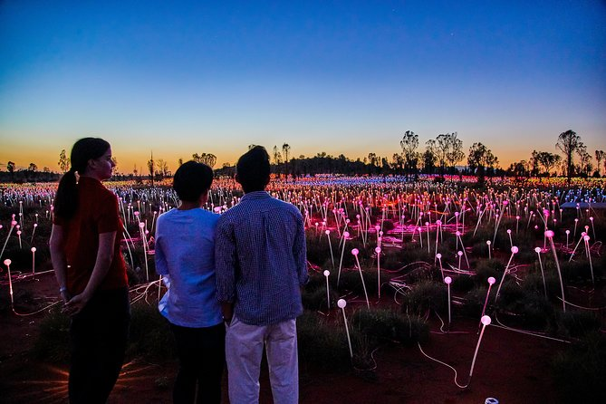 Uluru Field of Light Sunrise Tour - Accommodation Kalgoorlie