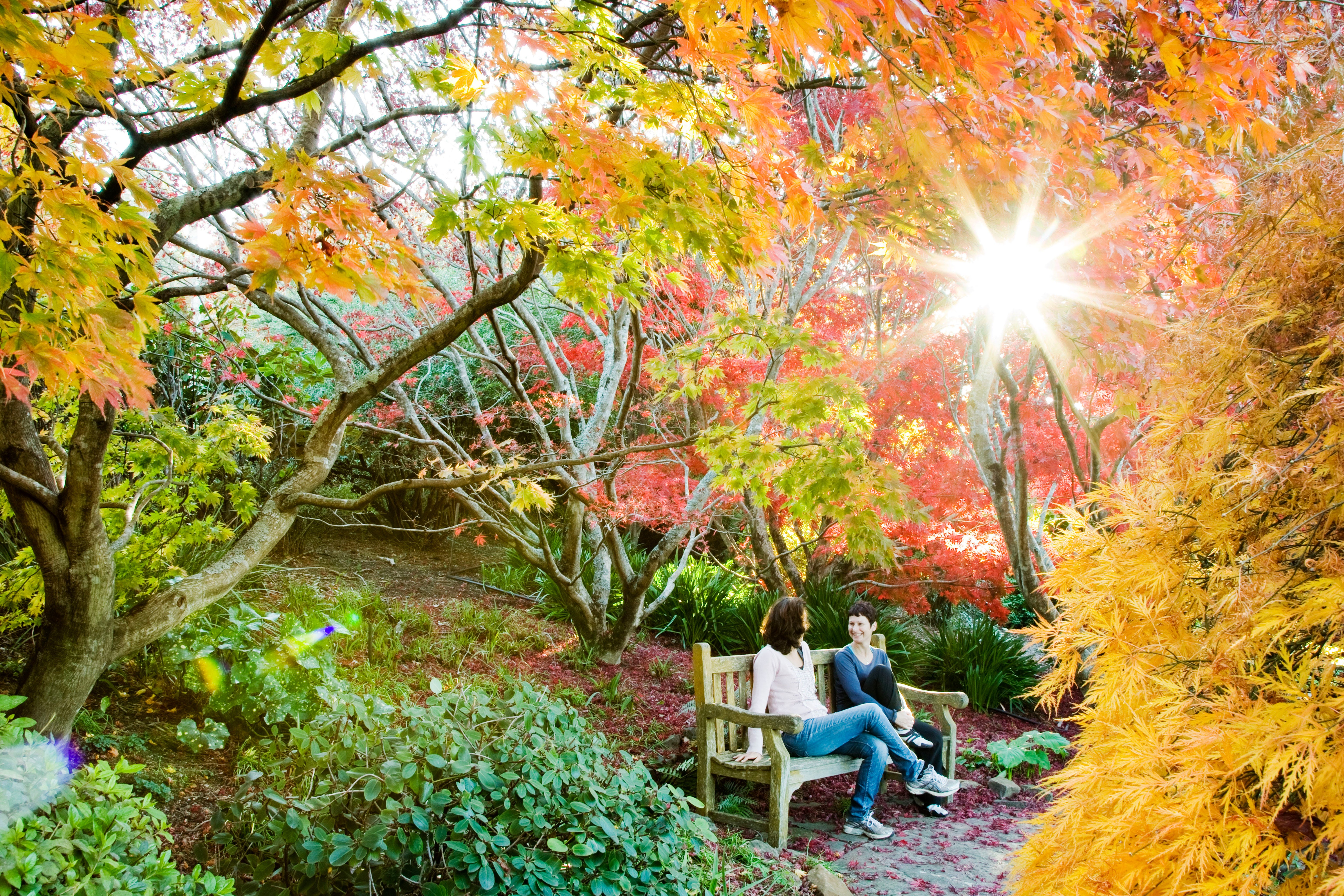The Blue Mountains Botanic Garden Mount Tomah - Accommodation Kalgoorlie