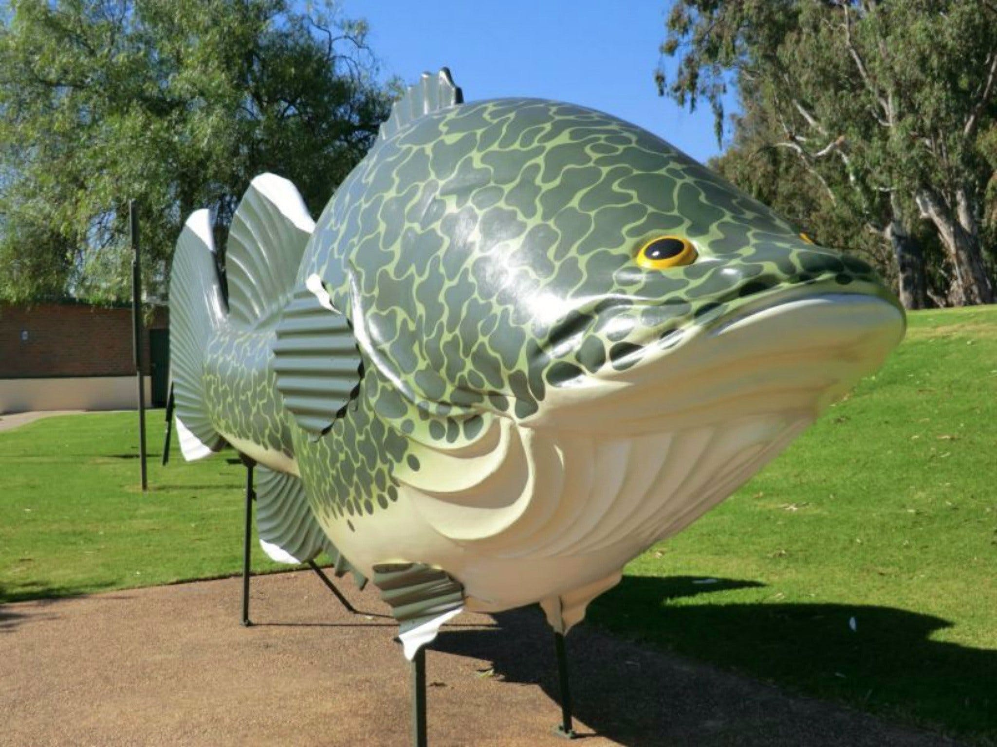 Big Murray Cod - Accommodation Kalgoorlie