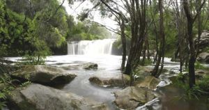Nellies Glen Carrington Falls - Accommodation Kalgoorlie