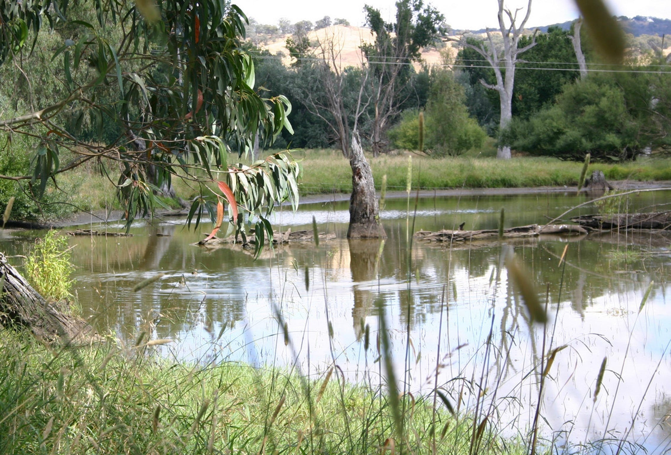 Tumut Wetlands - Accommodation Kalgoorlie