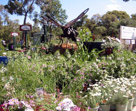 Zanthorrea Nursery - Accommodation Kalgoorlie