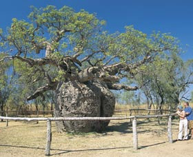 Boab Prison Tree - Accommodation Kalgoorlie