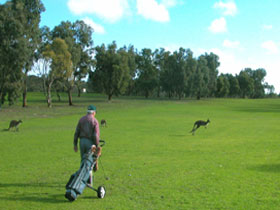 Coffin Bay Golf Club - Accommodation Kalgoorlie