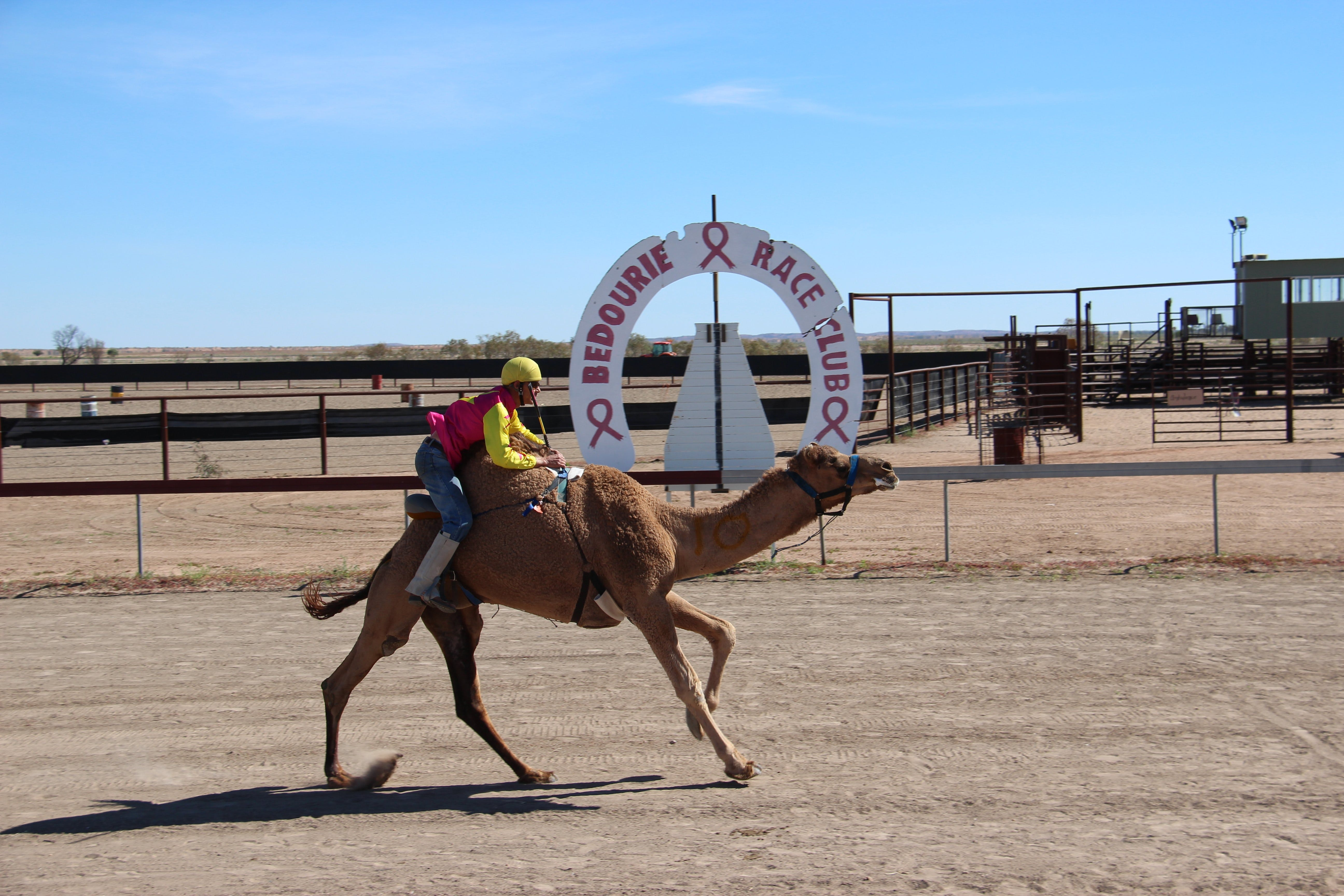 Bedourie Camel and Pig Races and Camp oven Cook-off - Accommodation Kalgoorlie